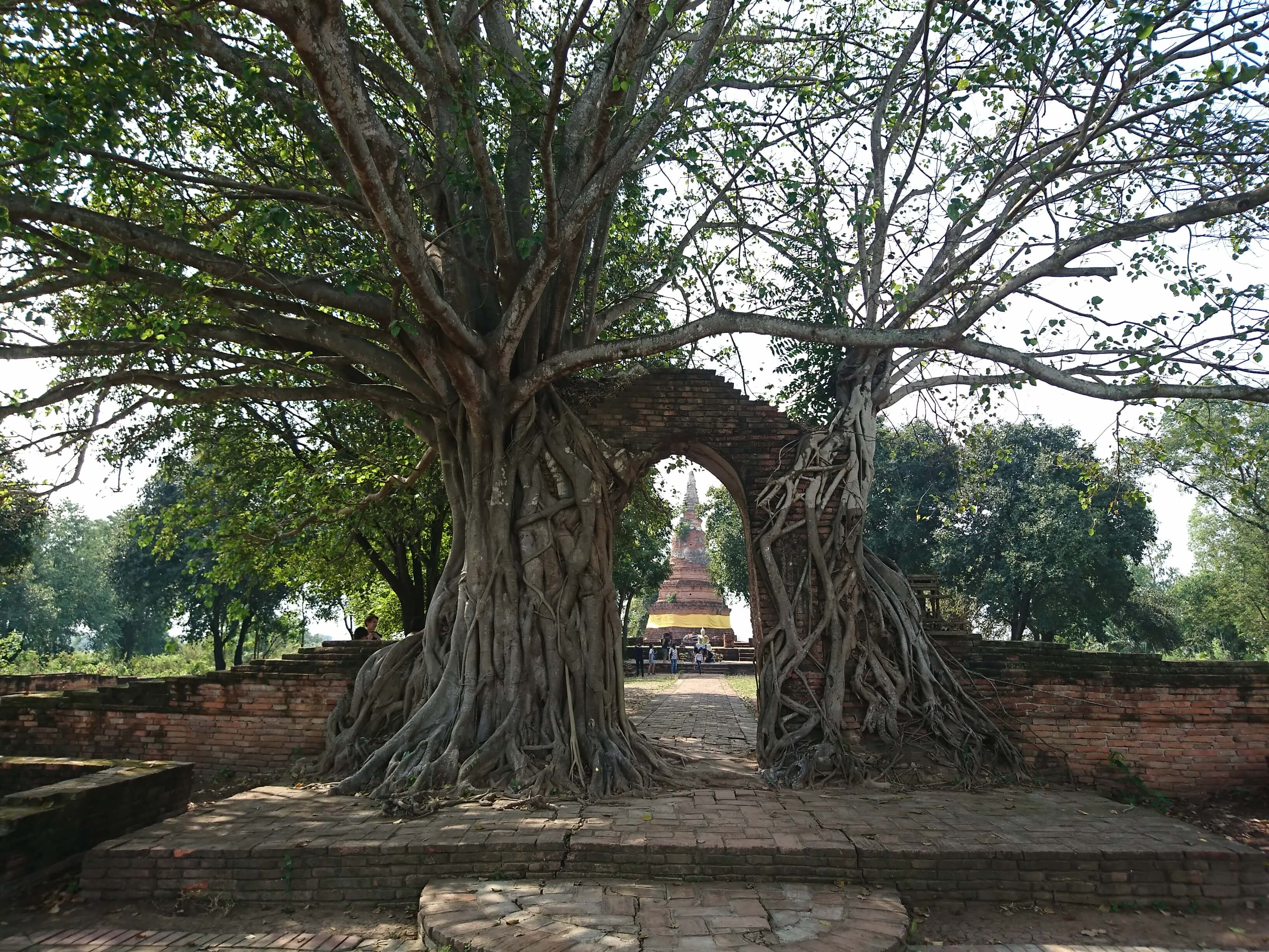 ワットパッンガーム(วัดพระงามคลองสระบัว・Wat Phra Ngarm)/ アユタヤ王朝滅亡から、タイムゲートが長い悠久の時を刻む仏教寺院遺跡