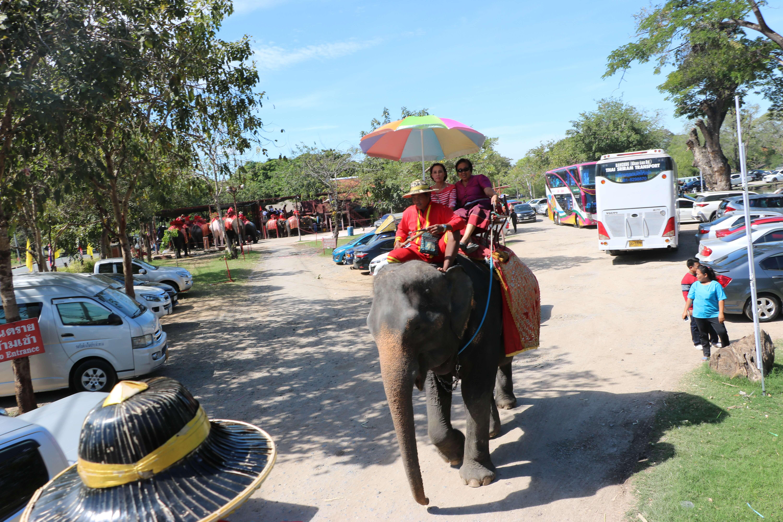 アユタヤエレファント キャンプ / アユタヤで象乗り体験を楽しむならココが一番!