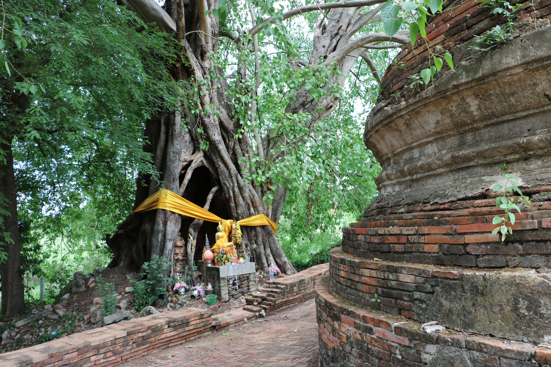 ワットロントーン(Wat Rong Thong)/ アユタヤ旧市街の郊外にあり、ビルマとの戦争犠牲者を悼むために建立された仏教寺院遺跡