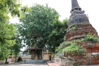 ワットウォンコーン(Wat Wong Khong・วัดวงษ์ฆ้อง)/ 盗掘被害が痛々しいチェーディー(仏塔)があるアユタヤ王朝中期から続く由緒ある仏教寺院