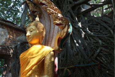 ワットサンクラターイ(วัดสังกระต่าย・Wat San Kratai)/ トンポー(菩提樹)に包まれた礼拝堂と仏像が信仰の対象となっているアーントーン県の仏教寺院遺跡